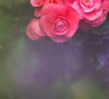 Dreamy Begonias Sticker
