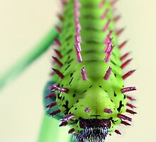 Spiny critter by jimmy hoffman