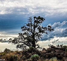 Lonely Tree #2 by Richard Bozarth