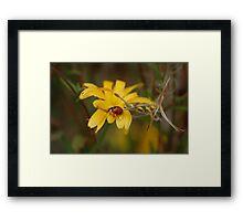 Ladybird on a flower  Framed Print