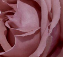 Pink  Rose .......... Sticker