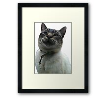 Casper the Cross Eyed Cat Framed Print