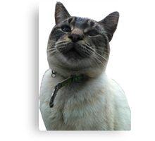 Casper the Cross Eyed Cat Canvas Print