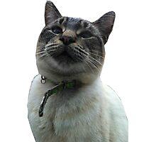 Casper the Cross Eyed Cat Photographic Print