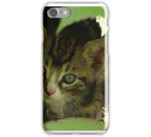Kitten iPhone Case/Skin