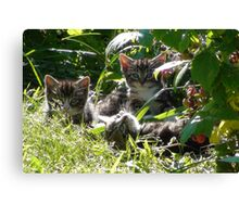 Kittens in morning sun Canvas Print