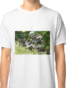 Kittens in morning sun Classic T-Shirt