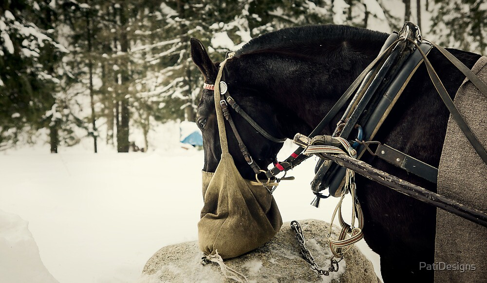 Winter Horse by PatiDesigns