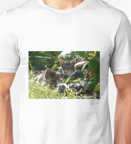 3 Kitties in morning sun Unisex T-Shirt