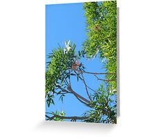 two dragonfly friends Greeting Card