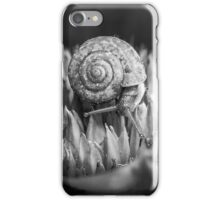 Monochrome macro shot of a snail on an exotic plant iPhone Case/Skin