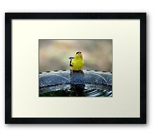 thirsty goldfinch... Framed Print