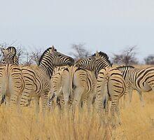 Zebra - African Wildlife Background - Feel the love  by LivingWild