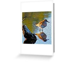 Sharp-tailed Sandpiper Greeting Card