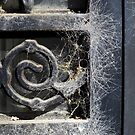 Cobwebs by WildestArt