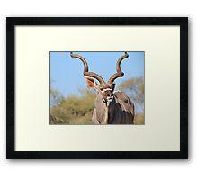 Kudu Bull - African Wildlife Background - Spiral Elegance Framed Print