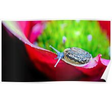 Macro shot of a snail on an colorful exotic plant Poster