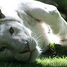 Sleepy White Tiger by ellismorleyphto