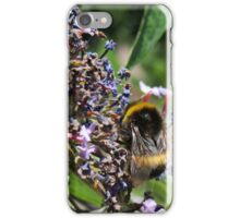Last of the Lavender Bumble Bee iPhone Case/Skin