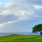Tree by Steve Hunter