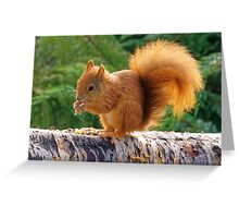 Red Squirrel with Nuts Greeting Card