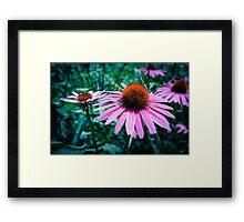 Echinacea Petals Framed Print
