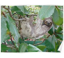 Adorable Sloth Poster