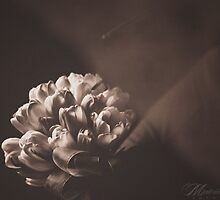 Tulips by maurenteria