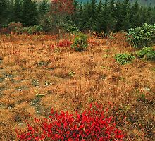 AUTUMN, BLUE RIDGE PARKWAY by Chuck Wickham