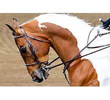 Arabian Horse Show Photographic Print