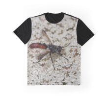 Cylindromyia bicolor Graphic T-Shirt