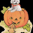 Pumpkin Bichon by IowaArtist