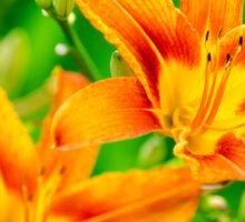 Summer Lilies Sticker
