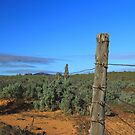 Wonoka fence line  by phillip wise