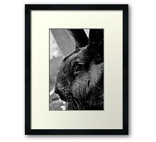 The white rabbits yin to his yang. Framed Print