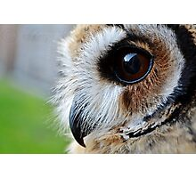 Loki-The mexican striped owl Photographic Print