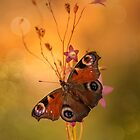 Peacock butterfly on bell flowers at sunset by JBlaminsky
