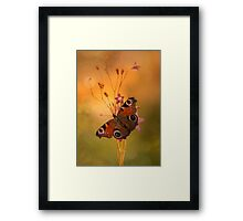 Peacock butterfly on bell flowers at sunset Framed Print