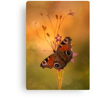 Peacock butterfly on bell flowers at sunset Canvas Print
