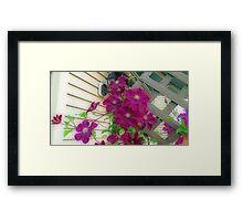 Backyard Purple Clematis Framed Print