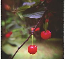 Cherries by Rebecca Tolk
