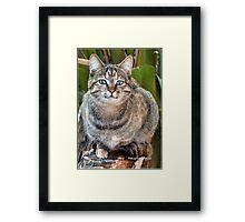 AFRICAN WILD CAT - Felis silvestris lybica  Framed Print