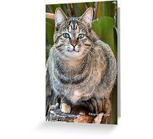 AFRICAN WILD CAT - Felis silvestris lybica  Greeting Card