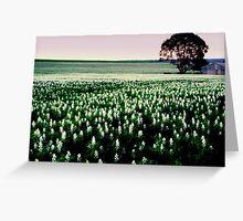 lupin field  Greeting Card