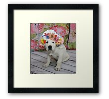 English Labrador Puppy with Bonnet Framed Print