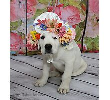 English Labrador Puppy with Bonnet Photographic Print