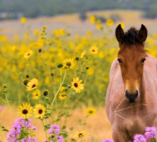 Foal and Flowers Sticker