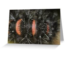 Prickly Caterpillar  Greeting Card