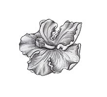 Sketched Hibiscus - B&W by katherinepaulin