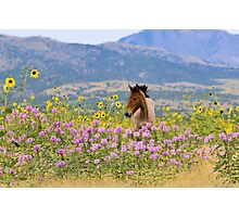 Foal and Flowers - 2 Photographic Print